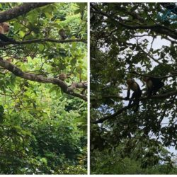 Monkeys in Costa Rica - The Coordinated Bride