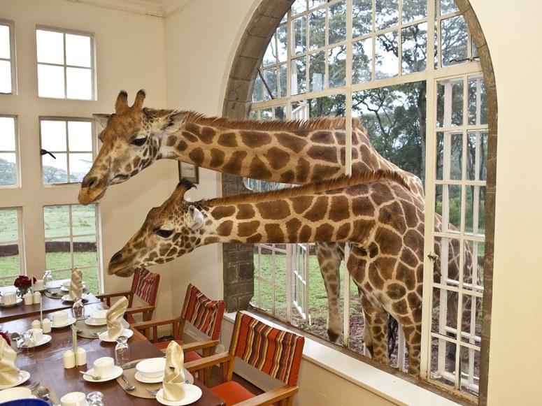 giraffe-manor-nairobi-nairobi-kenya-107763-2