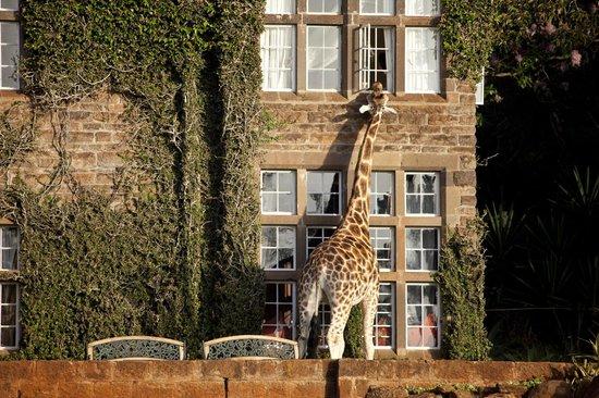 giraffe-manor-trip-advisor