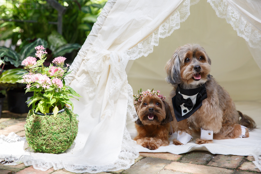 Bohemian Greenhouse Puppy Styled Wedding
